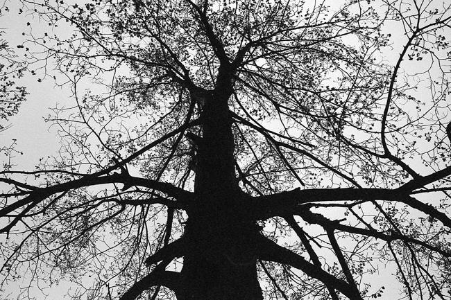 Leica M6 - JCH 016